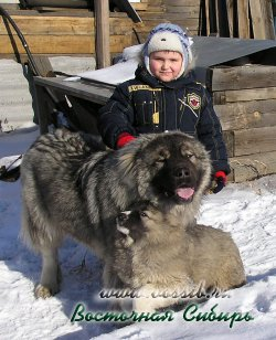 Важный из Восточной Сибири и Держава из Восточной Сибири