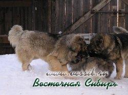 Генерал из Восточной Сибири  с матерью Набби Охта