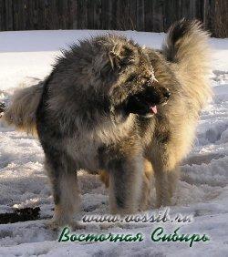 Евлампия из Восточной Сибири