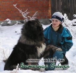 Метод 11. Устранение мотивации собак.