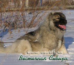 Генерал из Восточной Сибири 9 месяцев на прогулке