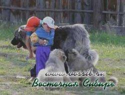 Русский Риск Непокоримый с детьми и щенками