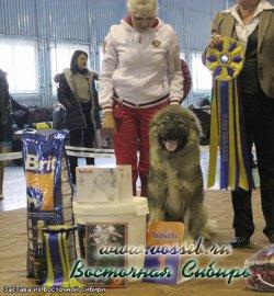 Застава из Восточной Сибири CW, Юный Победитель Клуба, Лучший Юниор Породы, 2-е в сравнении на ЛПП