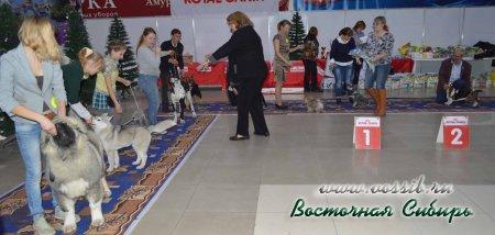 3-4.12.2016 г. 2 выставки собак ранга КЧФ кавказская овчарка