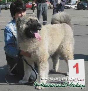 Ахтара из Восточной Сибири 11 месяцев
