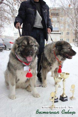 Лав Стори из Восточной Сибири, Застава из Восточной Сибири