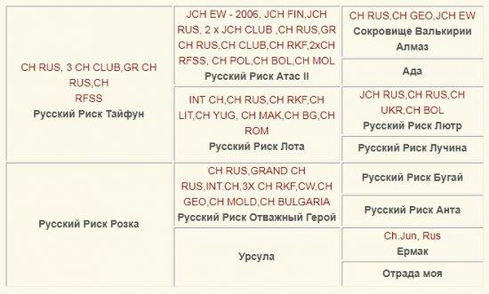 Русский Риск Рекорд