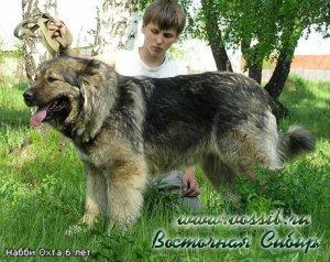 Набби Охта 6 лет