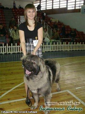 Габара из Восточной Сибири