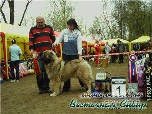 Гунна из Восточной Сибири Лучший Представитель Породы на национальной выставке 2010 год
