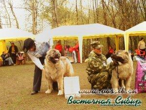 Гунна из Восточной Сибири Лучшая Сука на национальной выставке 2010 год