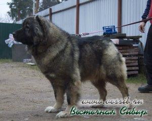 Ежевика из Восточной Сибири
