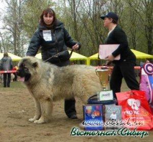 Ельцин из Восточной Сибири Лучший Юниор Породы на национальной выставке 2010 год