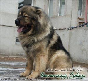 Ельцин из Восточной Сибири 2,5 гоода