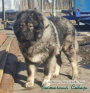 Илэй из Восточной Сибири 2 года