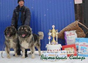 кавказская овчарка Лав Стори из Восточной Сибири и Застава из Восточной Сибири